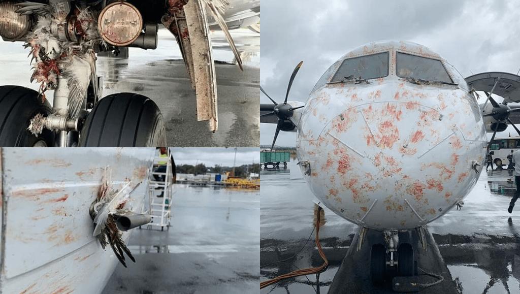 La Seguridad Aérea Española en peligro. Aeropuertos sin control de aves y aumento de impactos de ave